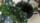 Blomst prikk og flekk